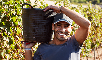 The Seasonal Agricultural Worker Program | NMWIG